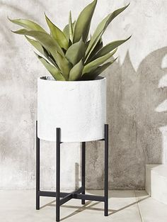 Give everyone green envy with modern planters and garden pots. Shop indoor and outdoor plant holders such as hanging pots, rail planters and more. Railing Planters, Resin Planters, Glass Planter, Basket Planters, White Planters, Modern Planters, Large Planters, Outdoor Planters, Planter Pots