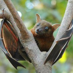 Installare una batbox significa garantire a questi piccoli mammiferi volanti un porto sicuro per il riposo diurno