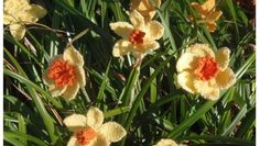 Knit daffodils for Easter! Loveknitting blog