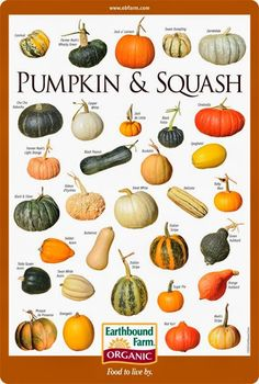 Alternative Gardning: Pumpkin & Squash Varieties Chart