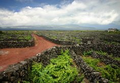 The old time vineyards of Pico Island, Azores, Portugal.   Photo courtesy of Tiago Jorge da Silva Estima via Shutterstock.  Exploring The Basalt Lined Vineyards And Historic Grapes Of The Azores' Pico Island By Jessica Festa on Mar 27, 2015