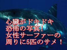 《海外の反応》心臓がドキドキ【画像】恐怖の写真! 女性??サーファーの周りに5匹のサメ!