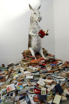Lee! Pero si hasta los burros leen! (fotografía de Michal Klimczak)