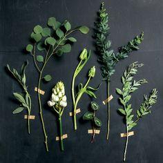Plant Palette: Sage, Silver Dollar Eucalyptus, Ornithogalum, Weber's Parrot Tulip, Cyclamen Foliage, Italian Mimosa, Acacia