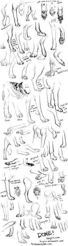 анатомия волков: 19 тыс изображений найдено в Яндекс.Картинках
