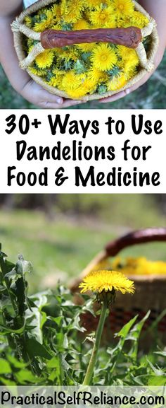 30 Ways to Use Dandelions for Food and Medicine Dandelions are used in all manner of tasty spring foods and as a bonus they're medicinal! Wild foraged herbal medicine from dandelions Dandelion Uses, Dandelion Recipes, Dandelion Flower, Dandelion Plant, Herbal Remedies, Home Remedies, Natural Remedies, Health Remedies, Healing Herbs