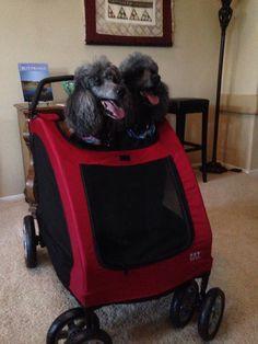 Dog stroller for two!