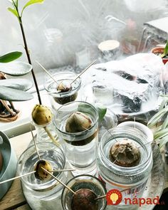 Kôstka z avokáda je cennejšia, ako ste si doteraz mysleli. Ikebana, Homemaking, Diy And Crafts, Alcoholic Drinks, Gardening, Fruit, Glass, Food, Bonsai