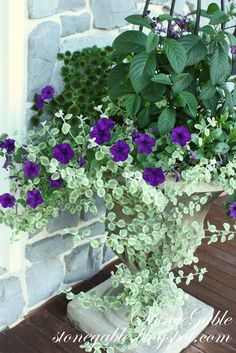 front porch planter purple flowers light green and dark green plant mix Front Porch Flowers, Front Porch Planters, Garden Planters, Potted Garden, Container Flowers, Container Plants, Container Gardening, Beautiful Gardens, Beautiful Flowers
