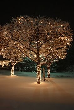 Wrapping outdoor trees with Christmas lights creates beautiful outdoor Christmas decorations using your yard's natural aesthetic. Wrapped outdoor trees are ofte Noel Christmas, Outdoor Christmas, Christmas Greetings, Winter Christmas, All Things Christmas, Winter Snow, Cozy Winter, Winter White, Christmas Lights Outdoor Trees