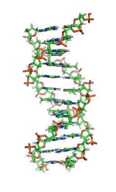 Desoxyribonucleïnezuur - Wikipedia
