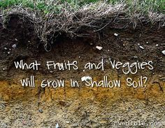 Can you grow food in shallow soil? Absolutely! #readerquestion