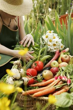 Seed Saving Tips for Your Summer Garden