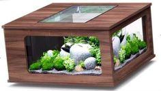Mit Aquarium fies für die Fische, aber mit einem Kakteengarten coole Idee