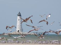 Seagulls encircling New Point Comfort Lighthouse, Virginia, USA. Jet Ski Fishing, Fishing Adventure, Island Life, Some Pictures, Coastal Living, Lighthouses, Palm Trees, Nautical, Virginia Usa