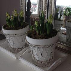 bloembollen in pot op dienblad