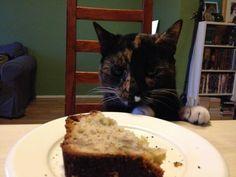 Cat vs Cake