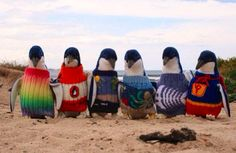 Penguins wearing sweaters