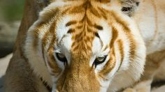 Chovaná zvířata | Park exotických zvířat, Dvorec u Borovan