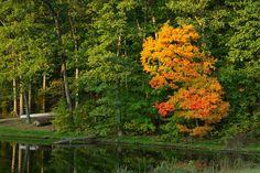 IMGP0420-2, via Flickr. -- 2010 Innsbrook Photo Contest, Innsbrook Resort, Missouri MO