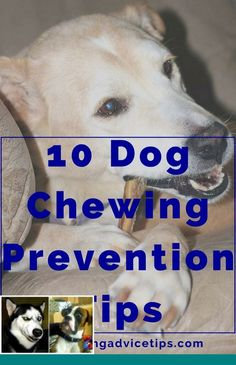 Easy tricks to teach your dog and puppy training tips cesar millan Cesar Millan Puppy Training, Puppy Training Tips, Training Your Puppy, Potty Training, Mites On Dogs, Stop Dog Barking, New Puppy, Easy Tricks, Best Dogs