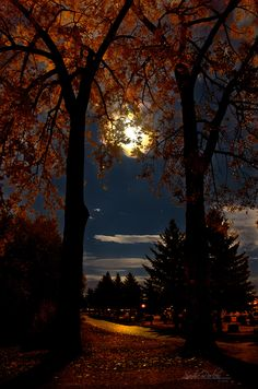 Full Moon Rising by Handie Full Moon Rising, Moon Rise, Full Moon Night, Stars At Night, Autumn Nature, Autumn Forest, Full Moon Pictures, Fall Pictures, Fall Pics