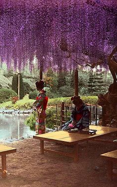 Geisha under wisteria - Plain Salted Paper Prints of Beautiful Old Meiji-era Japan Japanese Culture, Japanese Art, Japanese Gardens, Era Meiji, Memoirs Of A Geisha, Japanese Beauty, Okinawa, Shades Of Purple, Fuji