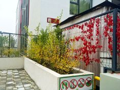Colorful autumn @ Citadela Residence Cluj