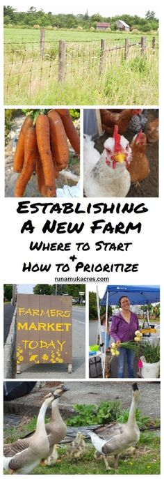 Establishing a new farm; where to start & how to prioritizeYou can find Small farm and more on our website.Establishing a new farm; where to start & how to prioritize Backyard Farming, Chickens Backyard, Starting A Farm, Micro Farm, Farm Lifestyle, Farm Layout, Farm Plans, Homestead Farm, Homestead Living