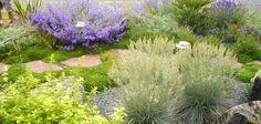 A stone path winds through this Mediterranean-themed gravel garden. Lavender 'Hidcote' and orange Helianthemum 'Henfield Brilliant'