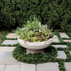 Edible Garden - Spectacular Container Gardening Ideas - Southern Living - Surrounded by a skirt of dwarf mondo grass, this ornate planter filled with an assortment of herbs provides a striking focal point in the middle of the diverging walks. Garden Types, Herb Garden Design, Garden Ideas, Dwarf Mondo Grass, Culture D'herbes, Container Herb Garden, Herb Gardening, Indoor Gardening, Fall Containers