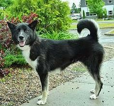 Adoptable of the week: Sydney http://pawsforreaction.blogspot.ca/2014/07/adoptable-of-week-sydney.html