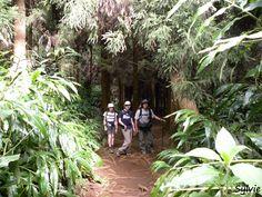 Sentier du piton Cabris par le bras Patates  / Ile de la Réunion