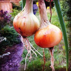 How do you like them onions.... (sorry)