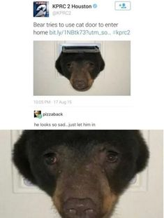 Have you laughed today? Enjoy the meme 'I cri' uploaded by Superilluminaughty. Memedroid: the best site to see, rate and share funny memes! Cute Funny Animals, Funny Animal Pictures, Funny Cute, The Funny, Hilarious Pictures, Most Famous Memes, Love Pictures For Him, Daily Funny, Animal Memes