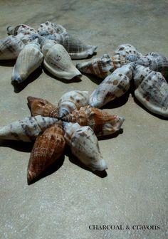 Super Simple Seashell Stars diy .... http://charcoalandcrayons.blogspot.com.au/2011/06/super-simple-seashell-stars.html#