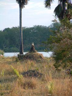 baboon sitting on a termite mound in Malawi http://www.trailheadstudios.com