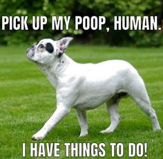 Funny Dog Meme.  I can actually picture this dog thinking that!