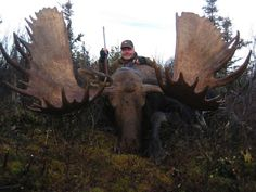 Monster Bull Moose « Find Outfitters – Hunting Trips – Big Game Hunting Outfitters