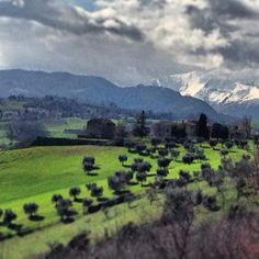 Le Marche, the region home to Casal Cristiana Italian Extra Virgin Olive Oil, is one of Italy's most fertile area.  From Adriatic Sea to the Sibillini Mountains, quality food products are abundant with clean soil, water and air.  Naturally beautiful too!