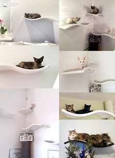 Exceptional Cat Perch, Shelf Wave, Floating Cat Shelves, Pet Design, Cat Shelves, Cat  Furniture, Curve Bed Design Ideas