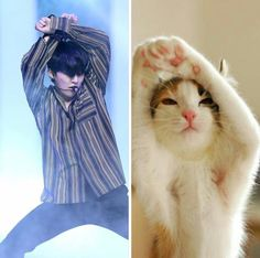 MinSeok vs. Kitten: I see no difference