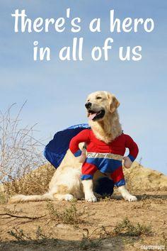super hero dog KORU BEAR - There's a Hero in All Of Us