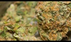 Colorado Continuing To Cash-In On Cannabis #Weird #WeirdNews