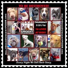 "16 BEAUTIFUL LIVES TO BE DESTROYED - 07/21/16 @ NYC ACC ~ This is a HIGH KILL ""CARE CENTER"". Too many great dogs put down daily! Babies, puppies, mamas, healthy, friendly dogs. POOR LIVING CONDITIONS & MINIMAL CARE. Please Share! Click for info & Current Status : http://nycdogs.urgentpodr.org/to-be-destroyed/"