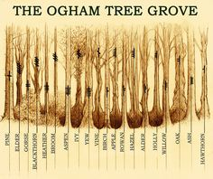 A Short Introduction to Celtic/Druid Ogham or Ogma Alphabet and How to Use it For Divination – Witches Of The Craft® Ogham Alphabet, Calligraphy Alphabet, Islamic Calligraphy, Celtic Druids, Celtic Paganism, Celtic Symbols, Druid Symbols, Irish Symbols, Mayan Symbols