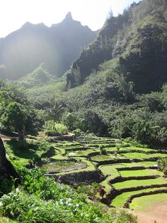 Limahuli gardens, Kaua'i.