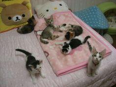 ) swoje własne obrazy i filmy z We Heart It Crazy Cat Lady, Crazy Cats, Cute Little Animals, Baby Animals, Hello Kitty, Cat Aesthetic, Doja Cat, Cute Cats, Funny Cats