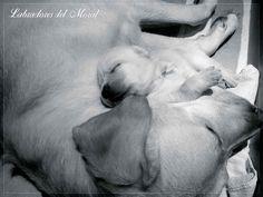 Momento relax! Thor & Ace descansando <3 <3 <3