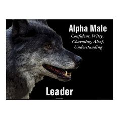Image result for alpha male real estate